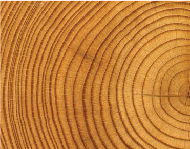 wood-industry